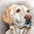 dog & pet portraits